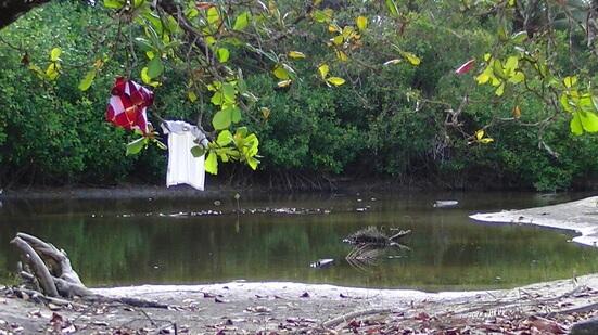 Manuel Antonio Costa Rica Picture