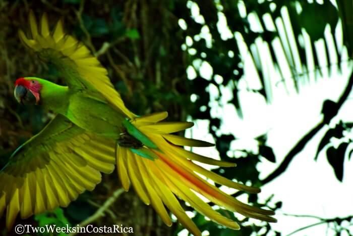 The Ara Project, Manzanillo, Costa Rica