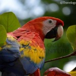 Macaws Flying Free: A Visit to the Ara Project