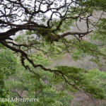 Diria National Park: Hiking Near Guanacaste's Gold Coast