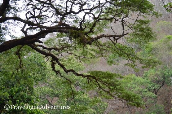 Diria National Park Photo