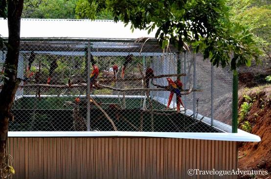 Scarlet Macaw Enclosure Image