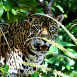 The Big Cats of Las Pumas Rescue Center