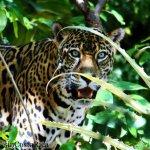 The Big Cats of Las Pumas Rescue Center