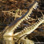 A Riverboat Adventure with Jose's Crocodile River Tour