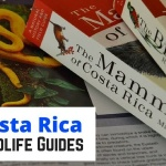 Costa Rica Wildlife Guides: Our Picks