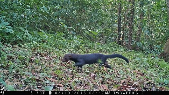 Spying on the Rainforest: Using Trail Cameras in Costa Rica - Two ...