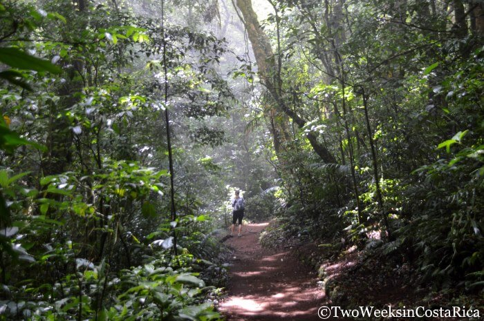 Monteverde: A Forest in the Clouds