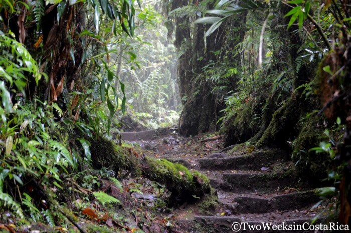 Trail Conditions at the Monteverde Cloud Forest Reserve